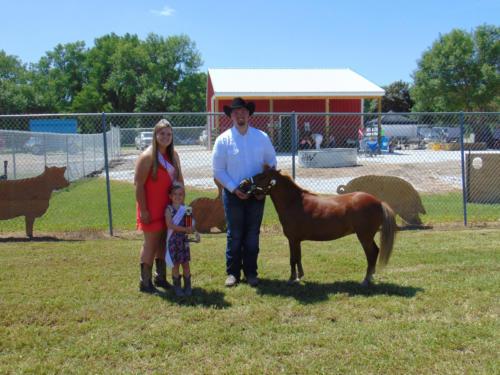 Reserve Champion Pony Halter Grant Theesfeld